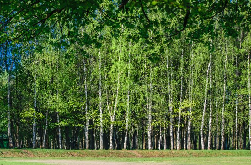 The edge of the forest on a summer day stock photography