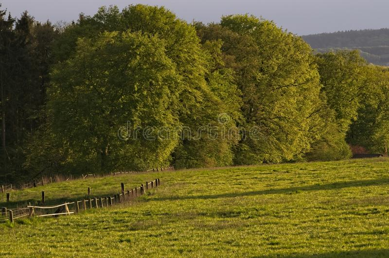 Edge of forrest on a summer evening royalty free stock images
