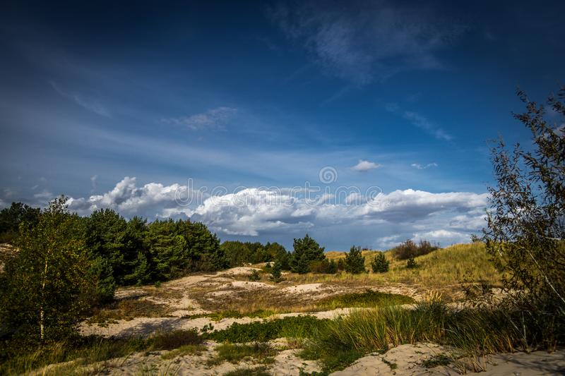 Edge of pine trees forest and grassy sandy beach in sunny day, a view from coastal promenade in Hel stock photos