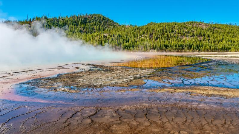 At the edge of a steaming hot spring at Yellowstone National Park. Wide angle view of the area surrounding Grand Prismatic Spring, as thick steam rises from the royalty free stock photo