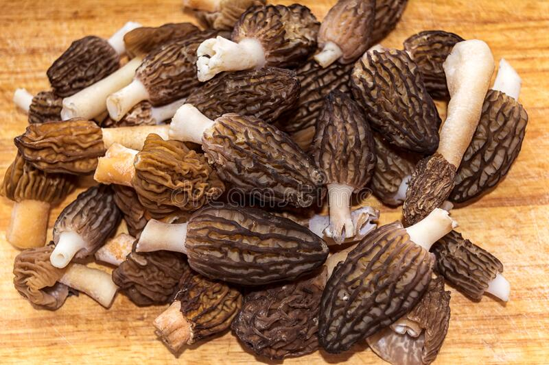 Edible black morel spring mushrooms. On the rustic background royalty free stock images