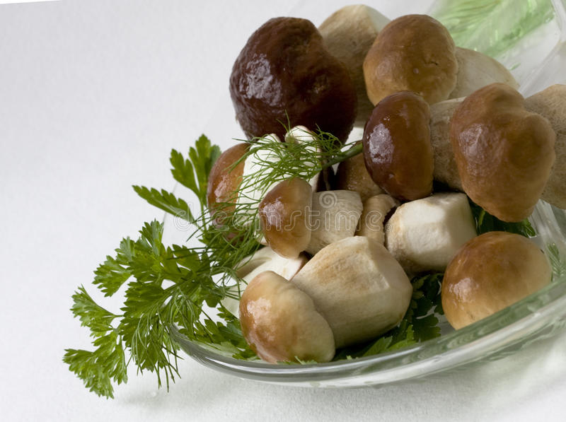 Download Edible boletus stock photo. Image of edible, amino, russian - 11677332