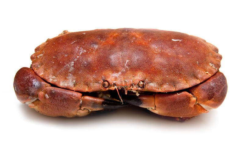 Download Edible brown crab. stock photo. Image of shellfish, cancer - 26634498