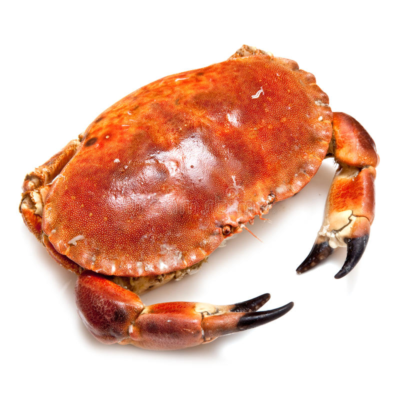 Download Edible Brown Crab. Stock Photography - Image: 26634512