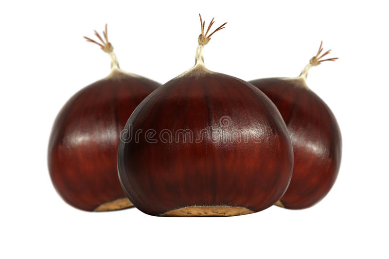 Edible chestnuts royalty free stock images