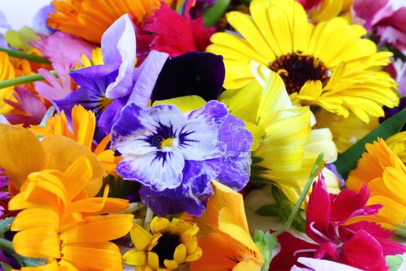 Edible Flower stock image