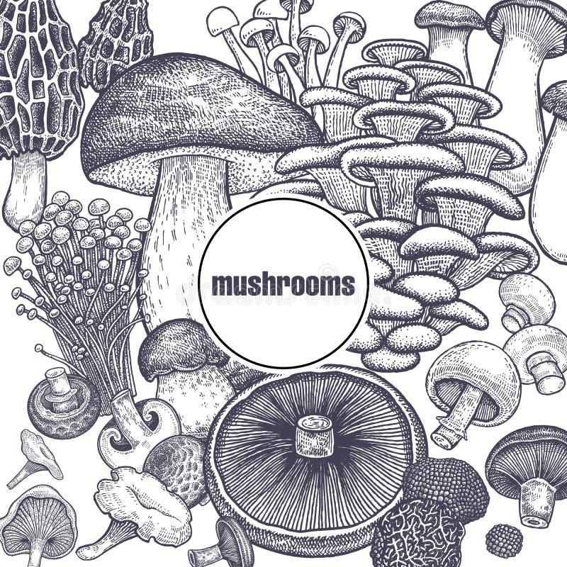 Free Edible Mushroom Poster. Royalty Free Stock Images - 111389159