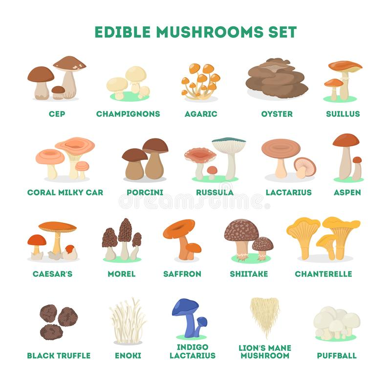 Edible mushroom set. Collection of natural product. Champignon and shiitake, agaric and truffle. Vegetarian nutrition, delicious fungus. Isolated vector vector illustration