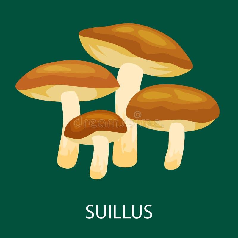 Edible mushroom Suillus luteus isolated, Wild Foraged , Vector natural mushrooms in nature set, organic vegetable fo stock illustration