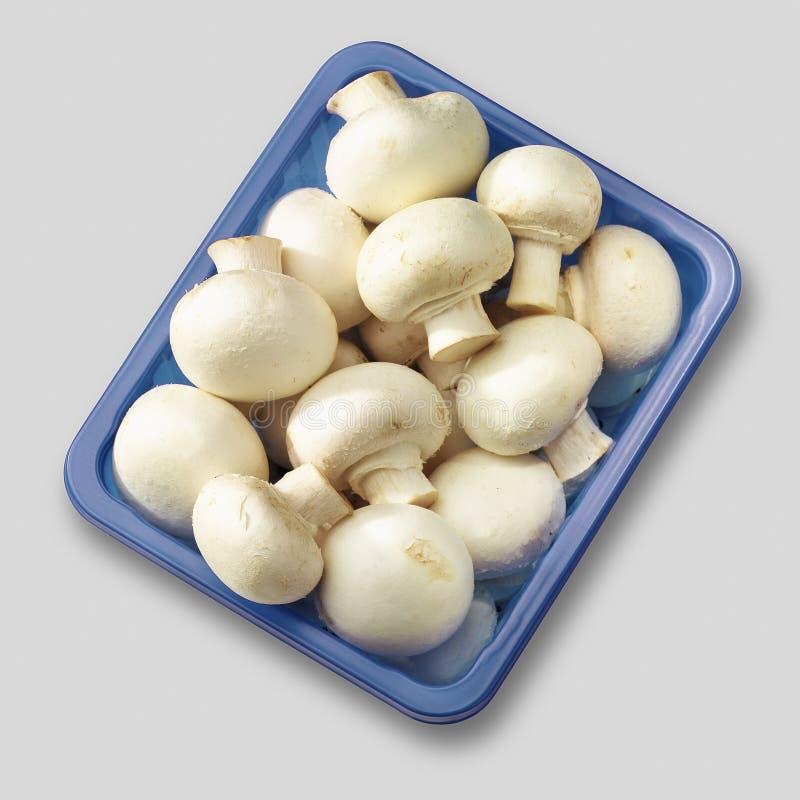 Download Edible Mushrooms Stock Image - Image: 21474151