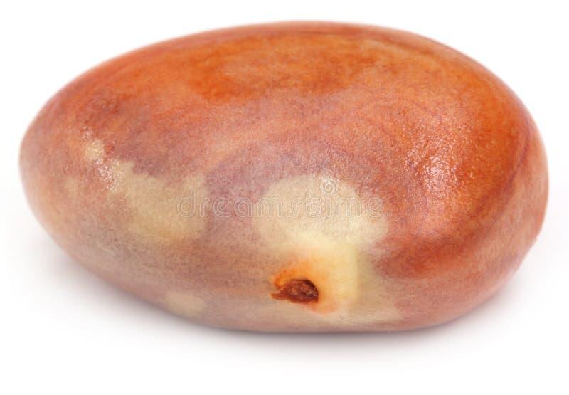 Edible Seed Of Jackfruit Royalty Free Stock Images