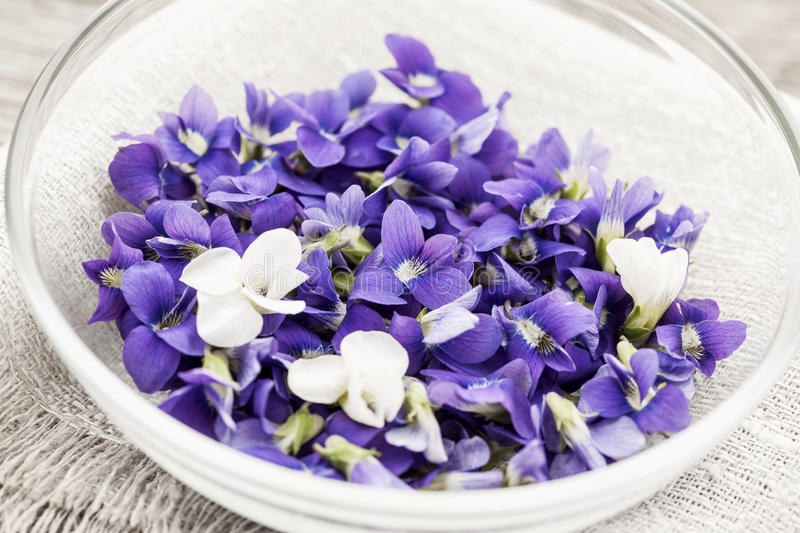 Edible violets in bowl stock image