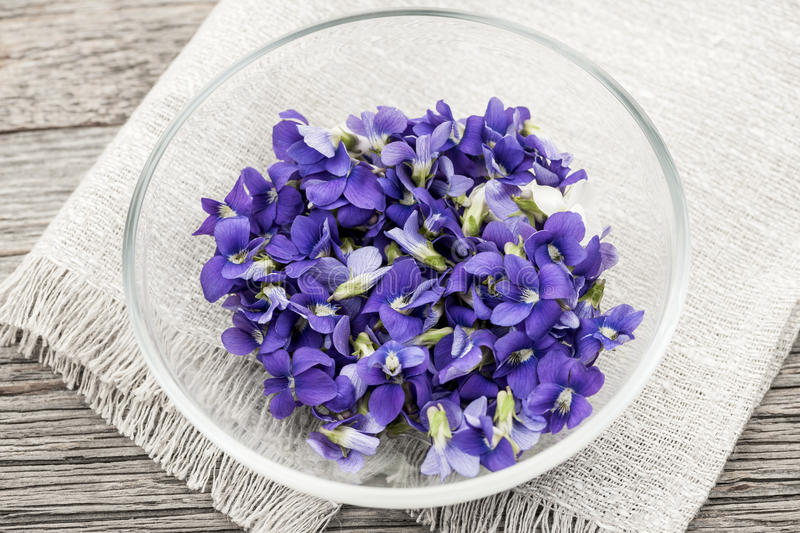 Edible violets in bowl stock photography