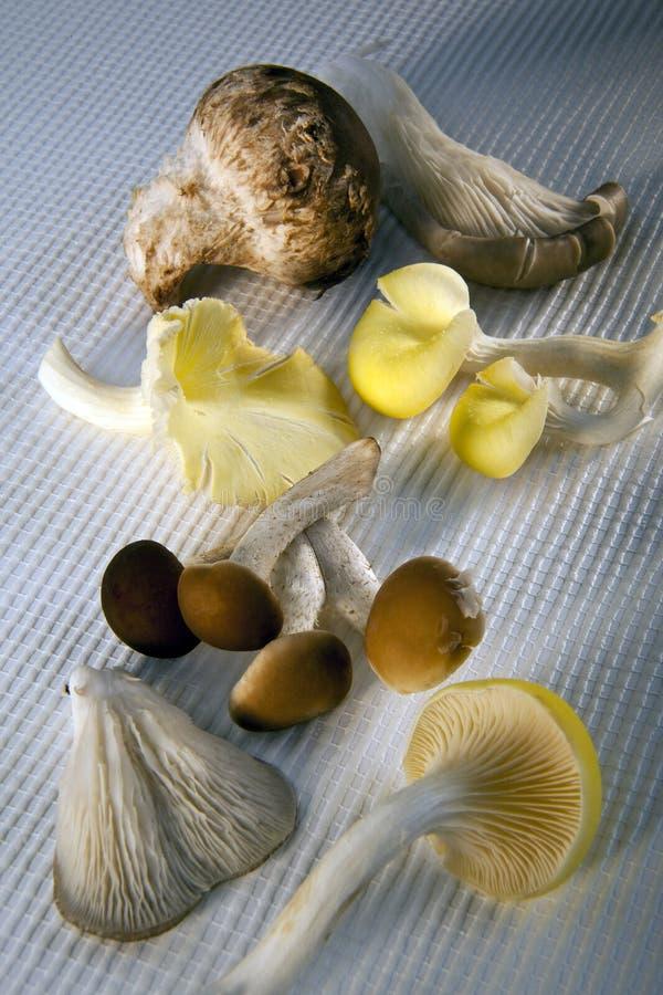 Download Edible Wild Mushrooms Stock Photography - Image: 16469152