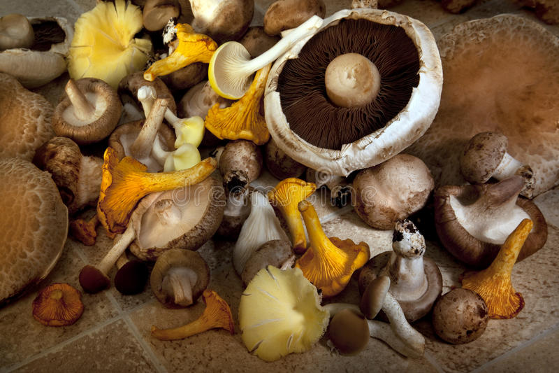 Download Edible Wild Mushrooms stock image. Image of gills, food - 22613513