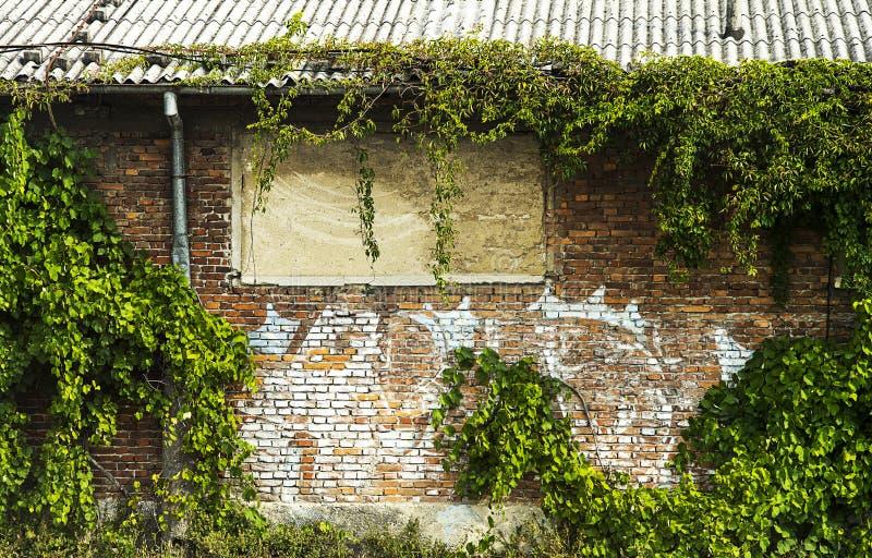 Edificio abbandonato coperto da piante immagine stock libera da diritti