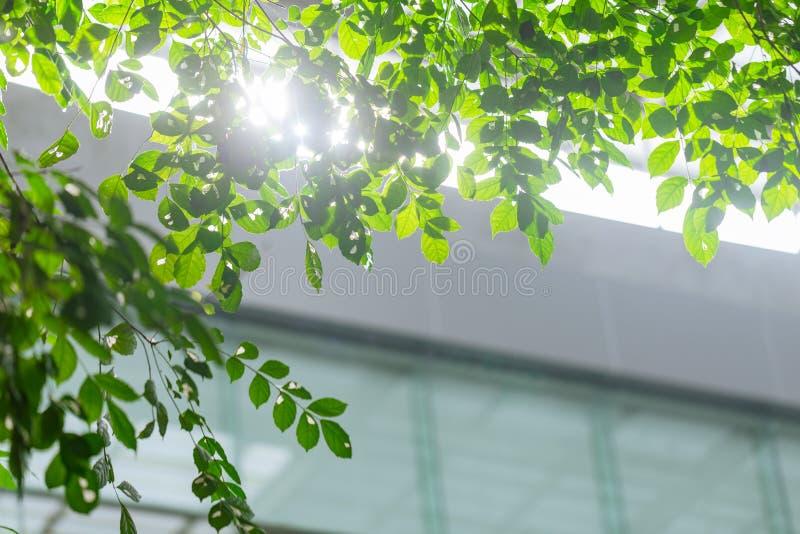 Edificio de Eco o interior verde del árbol de la planta de la oficina fotos de archivo libres de regalías