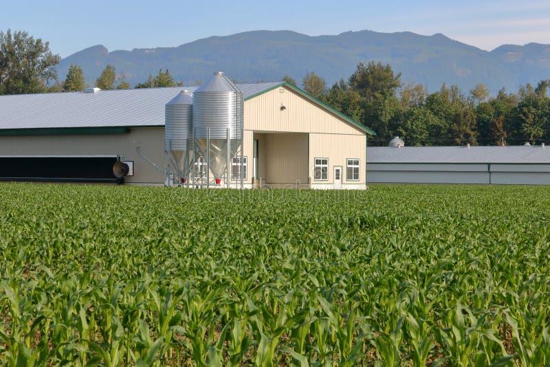 Edificio de la cosecha y de las aves de corral del maíz fotos de archivo libres de regalías