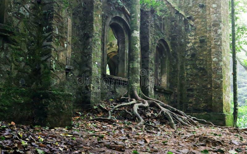 Edificio de la iglesia abandonado y parcialmente arruinado con árbol creciendo al lado de la pared imágenes de archivo libres de regalías