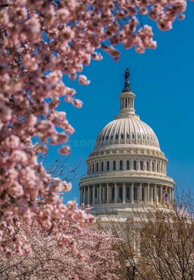 Edificio del capitolio de los E.E.U.U. durante primavera foto de archivo libre de regalías