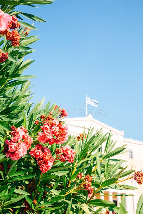 Edificio del Parlamento griego con flores en Atenas, Grecia imagenes de archivo