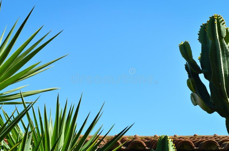 Edificio del tejado de teja, cactus del cirio de floración de noche y hojas de palma contra el cielo azul claro imagenes de archivo
