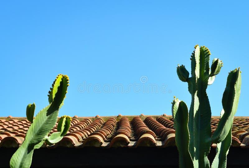 Edificio del tejado de teja y cactus del cirio de floración de noche contra el cielo azul claro fotografía de archivo