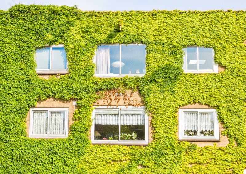 Download Edificio Ecológico Con La Pared Llena De Plantas Imagen de archivo - Imagen de jardín, moderno: 41920247