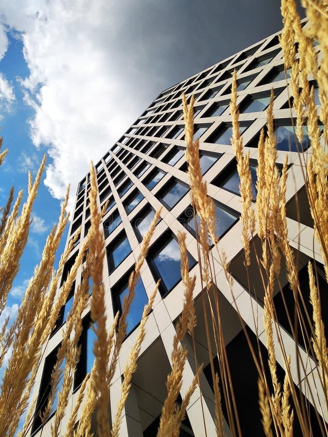 Edificio moderno, visión inferior edificio de oficinas de varios pisos, rascacielos el vidrio y el hormigón es una tendencia de m fotografía de archivo libre de regalías