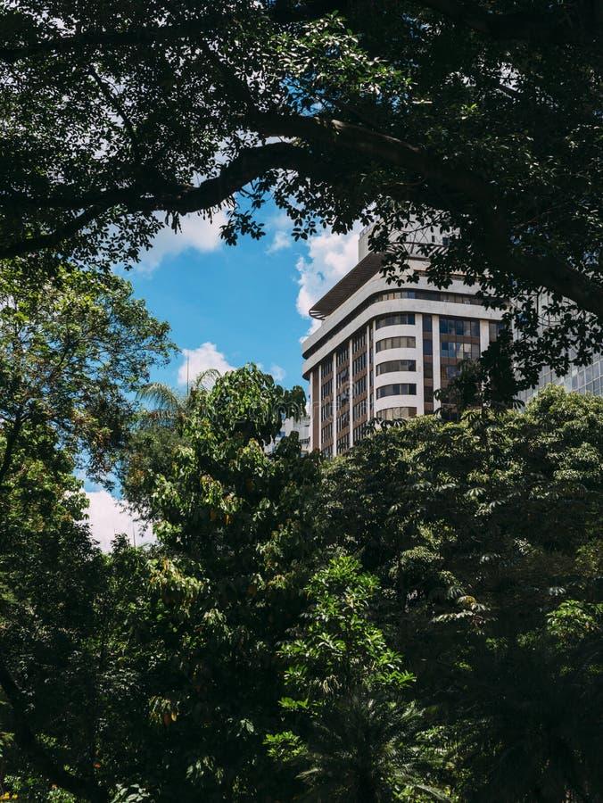 Edificio residencial de la alta subida obscurecido por la vegetación tropical enorme de la selva tropical foto de archivo libre de regalías