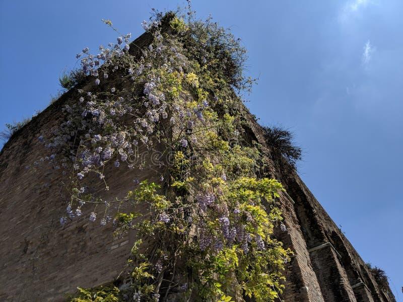 Edificio romano antiguo con las flores salvajes fotos de archivo