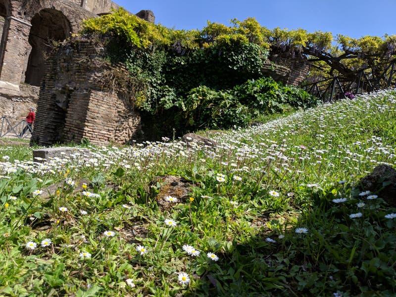 Edificio romano antiguo con las flores salvajes fotografía de archivo libre de regalías