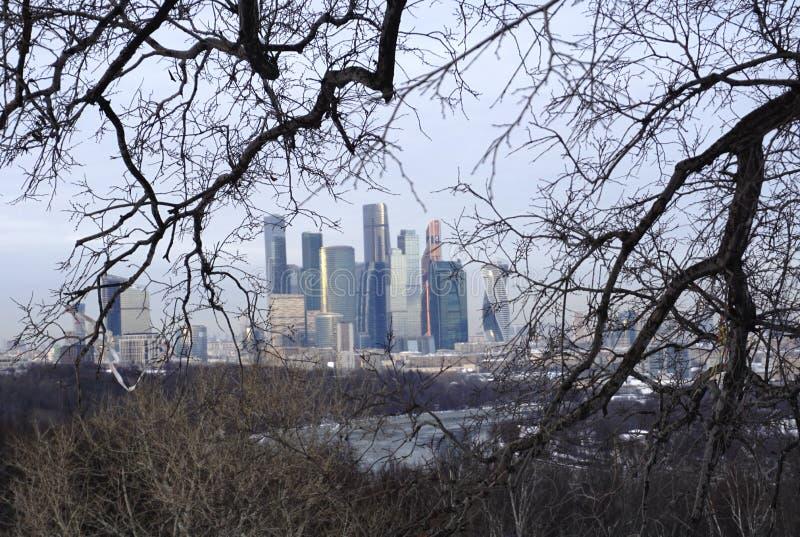 Edificios altos en el fondo en las ramas de árboles imagen de archivo