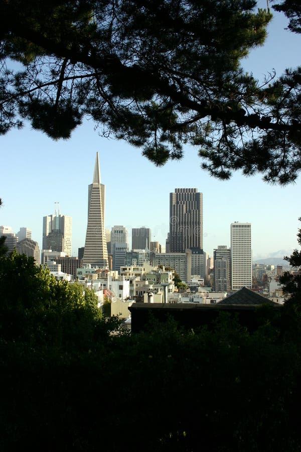 Download Edificios De San Francisco De árboles Imagen de archivo - Imagen de california, área: 186449