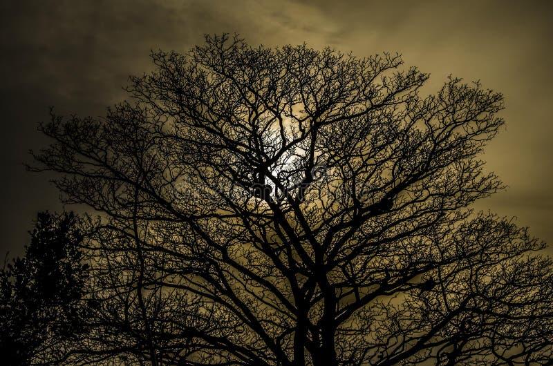 Edimburg-Sonnenuntergang lizenzfreies stockbild