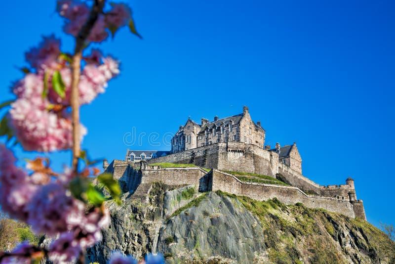 Edinburgh-Schloss mit Frühlingsbaum in Schottland stockfoto