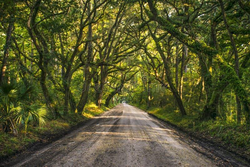 Edisto ö södra Carolina Oak Tree Tunnel nära charlestonSC arkivbild