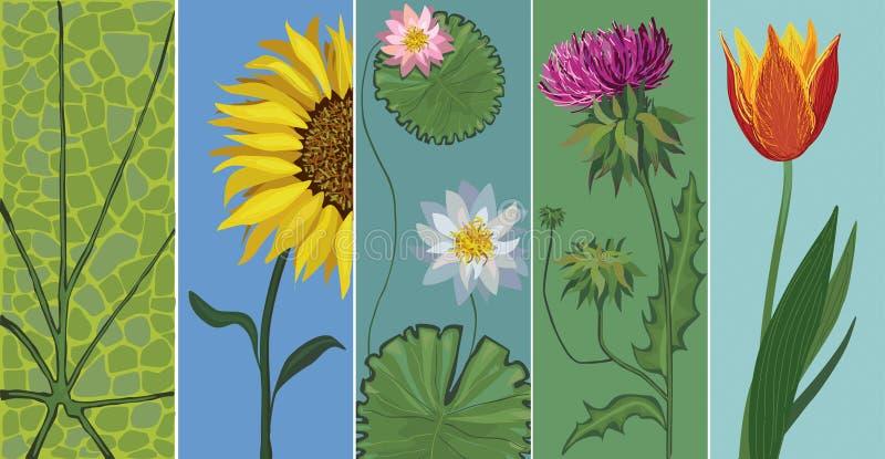 editable вектор установленный цветками иллюстрация вектора