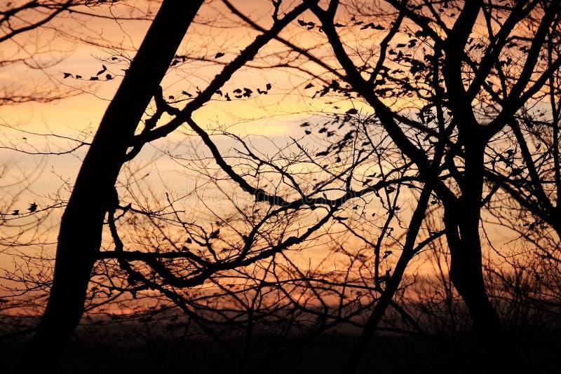 editable eps w pełni sunset jpg drzewa obrazy royalty free