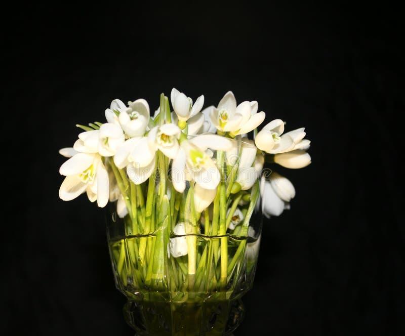 Editori della primavera immagini stock libere da diritti