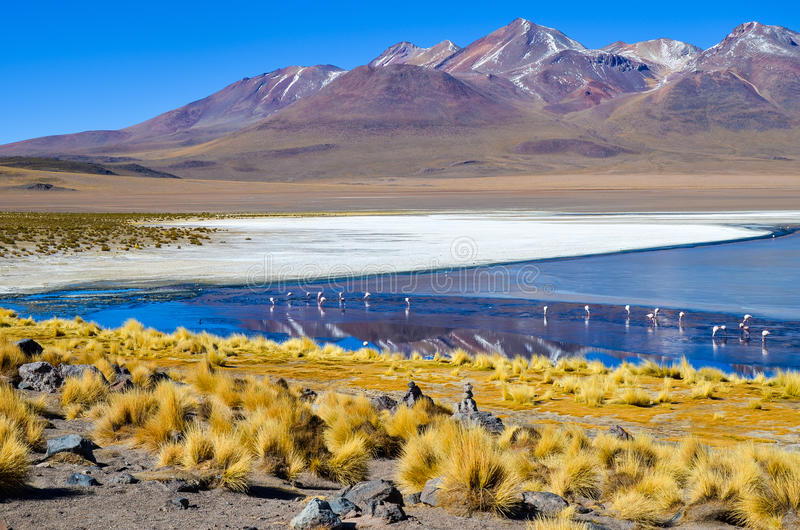 Eduardo Avaroa Andean Fauna National-Reserve, Bolivië royalty-vrije stock foto's