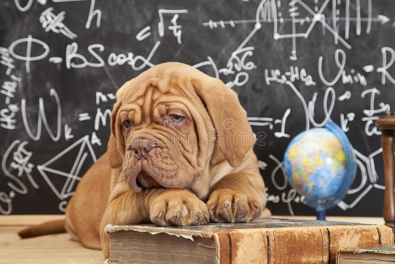 Educação do cão fotos de stock