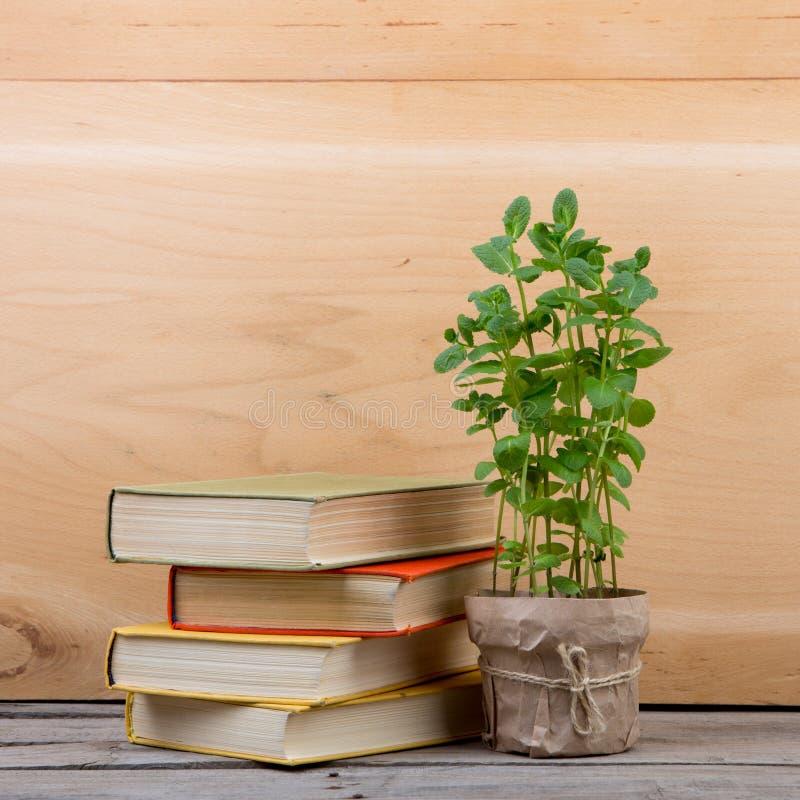 Educaci?n y concepto de la lectura - libros y planta verde fotografía de archivo libre de regalías