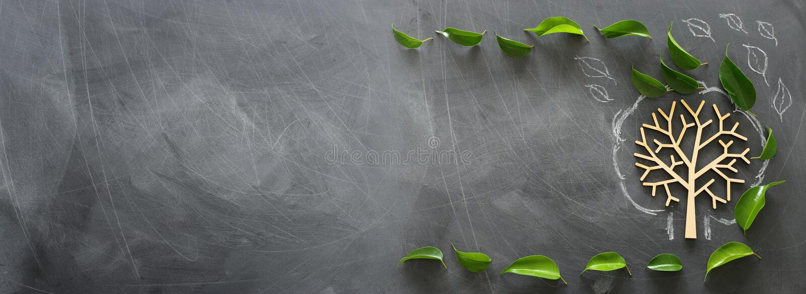 Education and business concept. Top view banner of wooden tree and green leaves over classroom blackboard background.  royalty free stock photo