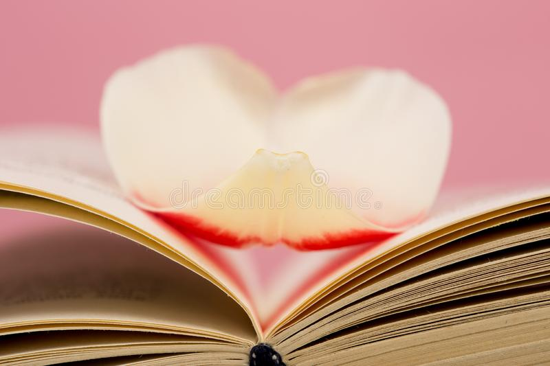 education and reading concept - open book with flower leafs stock photography
