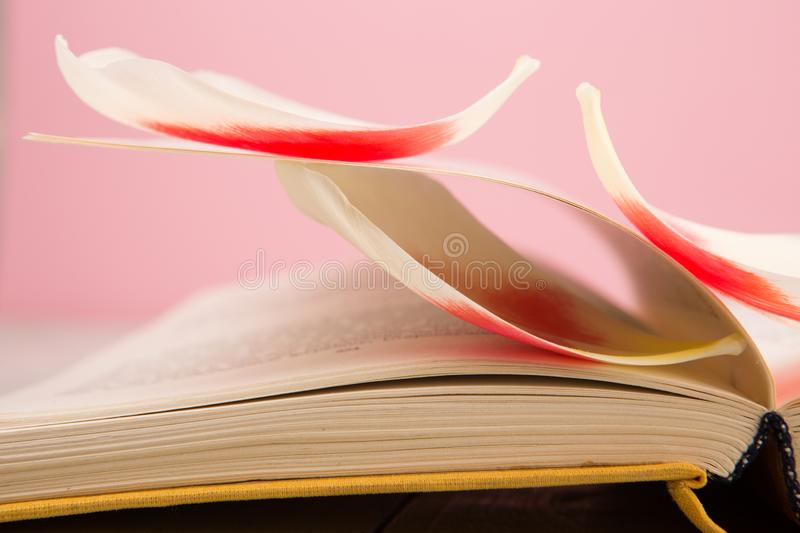 education and reading concept - open book with flower leafs royalty free stock photo