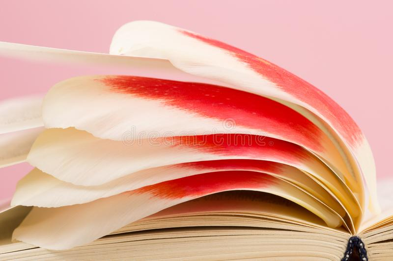 education and reading concept - open book with flower leafs royalty free stock photography