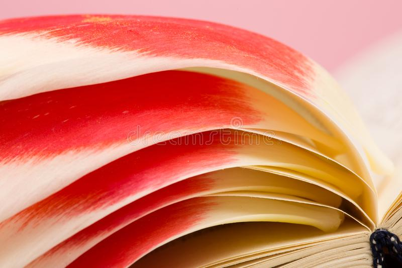 education and reading concept - open book on wooden table, color background stock photography