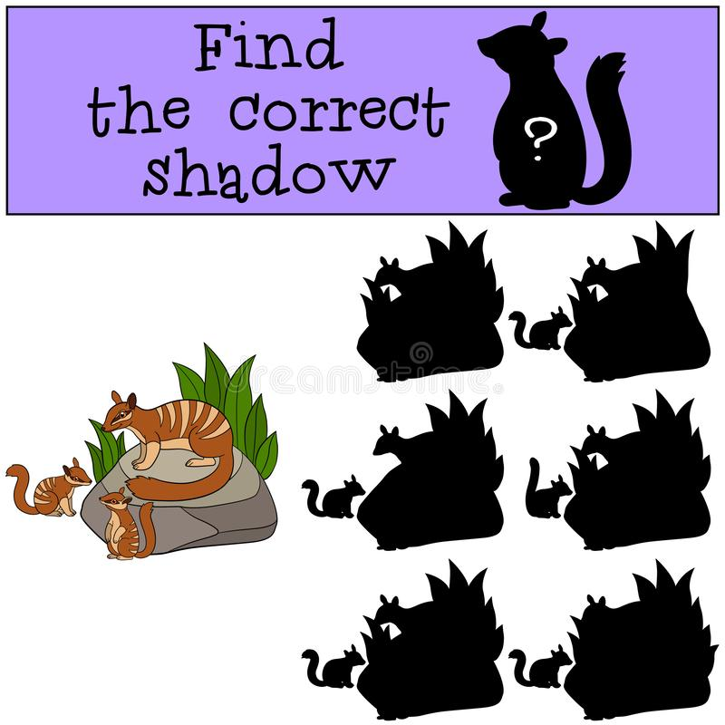Educational game: Find the correct shadow. Mother numbat with babies. Educational game: Find the correct shadow. Mother numbat with her little cute babies vector illustration