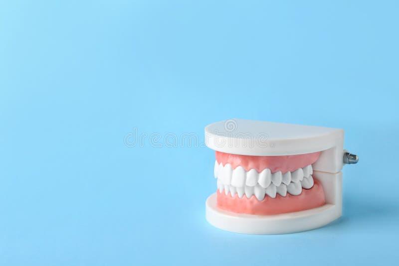 Edukacyjny model oralny zagłębienie z zębami obrazy royalty free